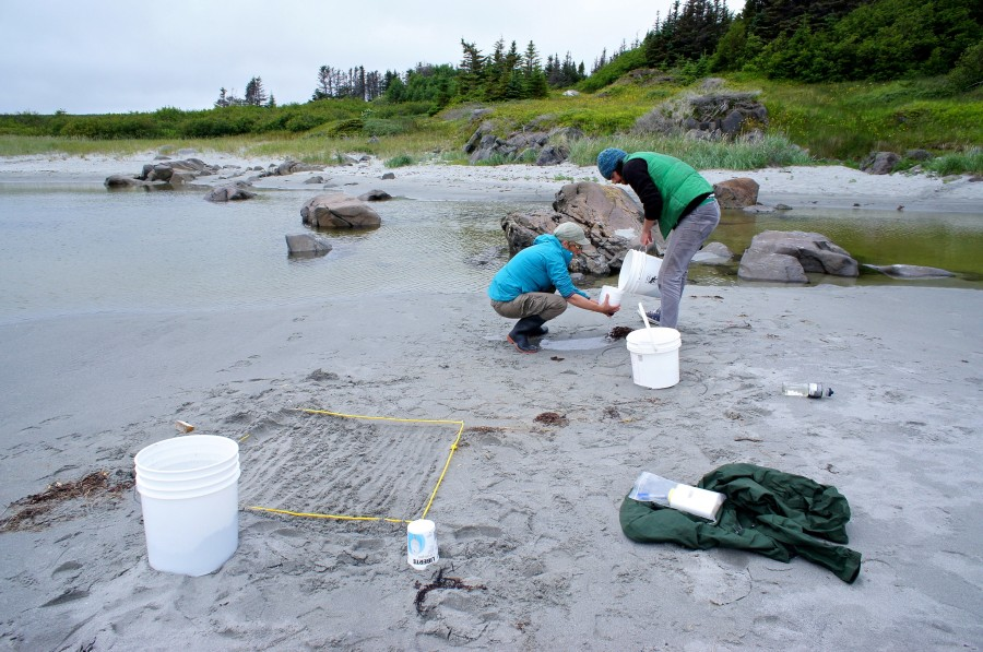 Partners Dr. Yolanda Wiersma and student Matt McWilliams survey for shoreline plastic in Tilting, Fogo Island, 2015