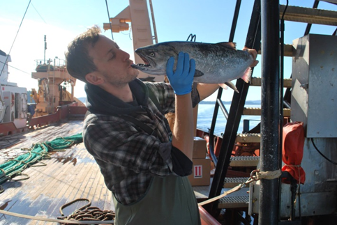 Graduate student Stephen Philips collecting data aboard of the DFO/W.E. Ricker
